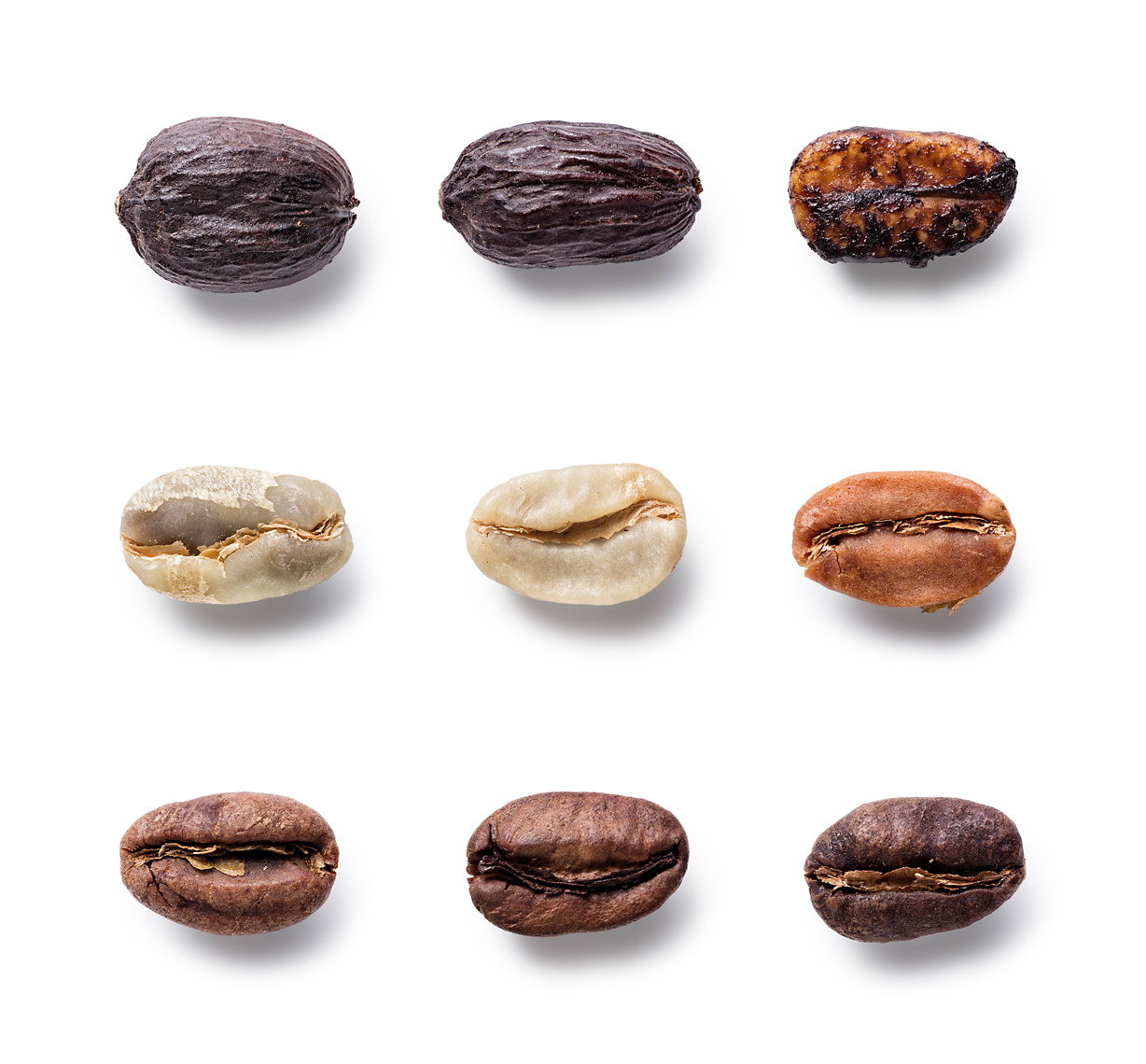 Coffee Bean evolution